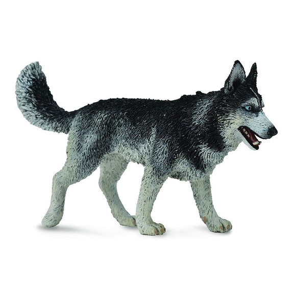 CollectA Siberian Husky-88707-Animal Kingdoms Toy Store