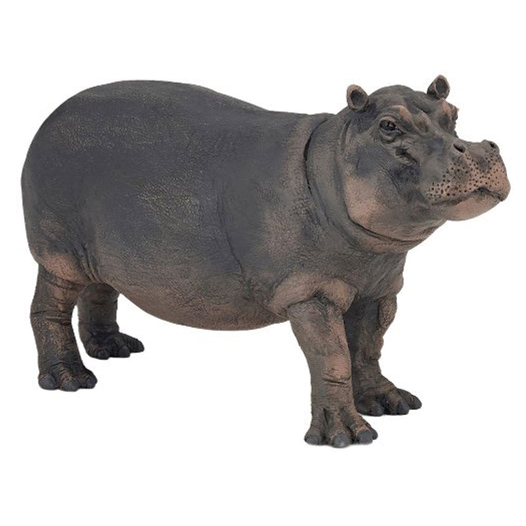 Papo Hippopotamus Cow - Wild Life - AnimalKingdoms.co.nz