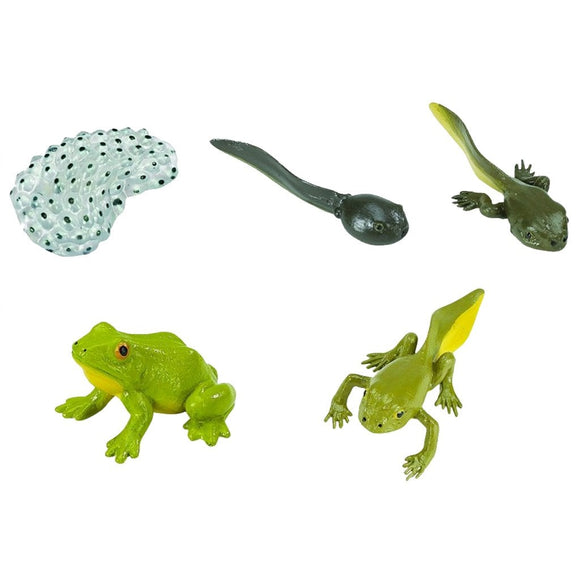 Safari Ltd Life Cycle of a Frog-SAF269129-Animal Kingdoms Toy Store