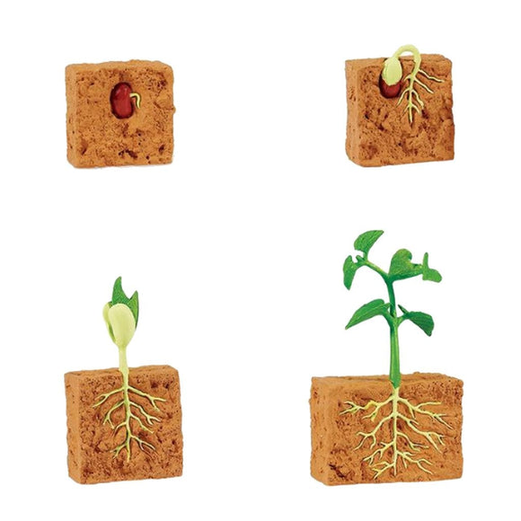 Safari Ltd Life Cycle of a Green Bean Plant-SAF662416-Animal Kingdoms Toy Store