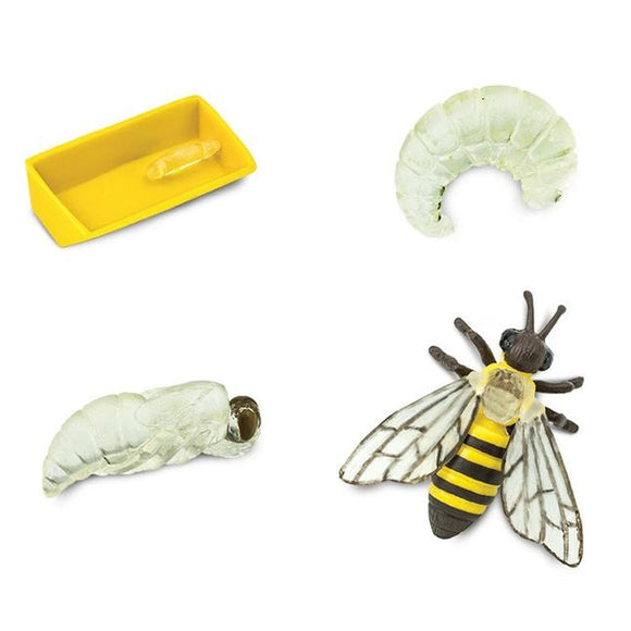 Safari Ltd Life Cycle of a Honey Bee-SAF622716-Animal Kingdoms Toy Store
