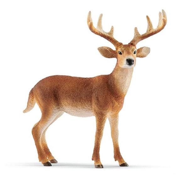 Schleich White-Tailed Buck 2019 - Wild Life - AnimalKingdoms.co.nz