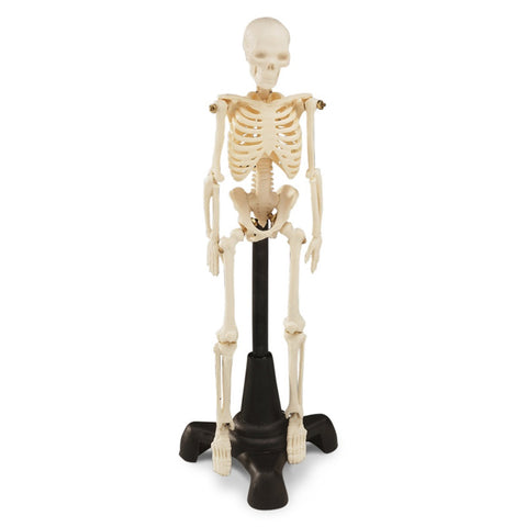 mini skeleton
