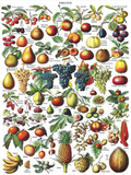 1000pc puzzle fruits