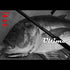 Ripple Fisher Ultimo 2019 - Compleat Angler Nedlands Pro Tackle