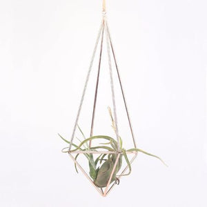 Home: Rose Gold Air Plant Holder - essential.merch