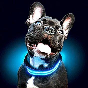 Dog & Cat: Lifesaving LED Collar - essential.merch