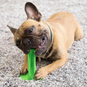 The Chomper™ Dog Toothbrush Chew Toy - essential.merch