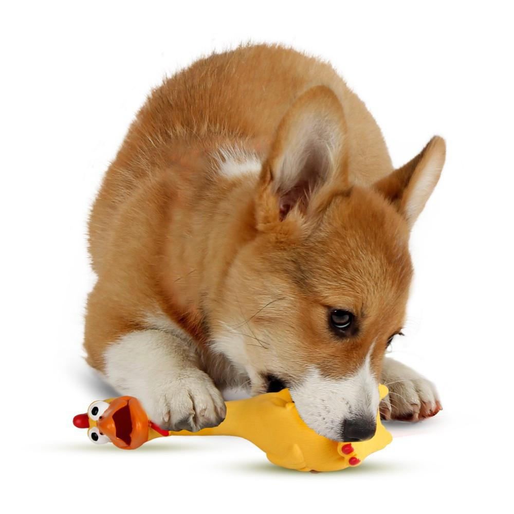 Dog Squeaky Rubber Chicken Toy - essential.merch