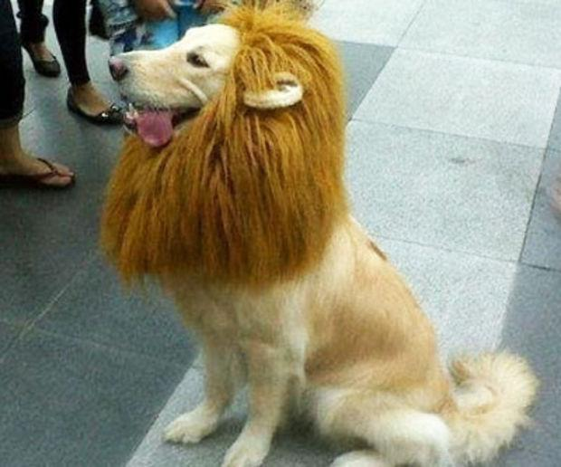 King of the House Lion Mane for Dogs - essential.merch