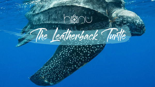 Sea Turtle Spotlight - The Great Leatherback!