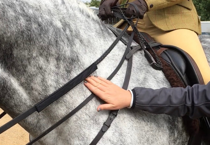 Bossy's Bibs ReinGuards: Protecting Your Horses Neck from Rein Rubs.