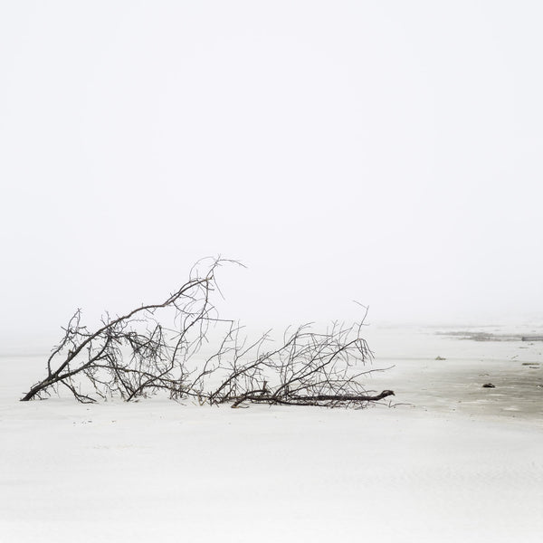 Featured Cumberland Island