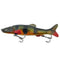 "Raptor Lures Tsunami 6"" Peacock Bass Hard Baits"