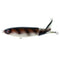River2Sea Whopper Plopper 130 Rat Ta Tat Hard Baits
