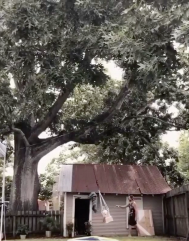 Swing under a oak tree