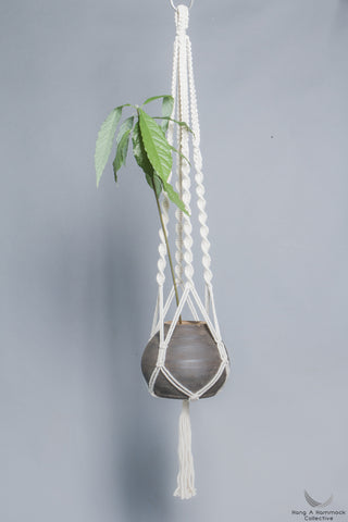 Plant hanger in macrame with a green avocado plant- studio picture