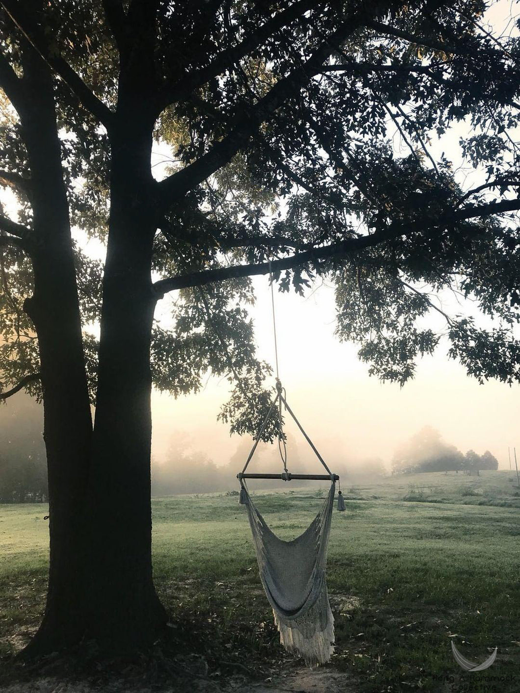 hammock chair hanging under a big tree during the morning