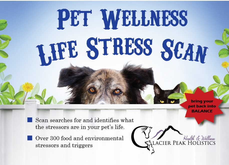Pet Wellness Life Stress Scan