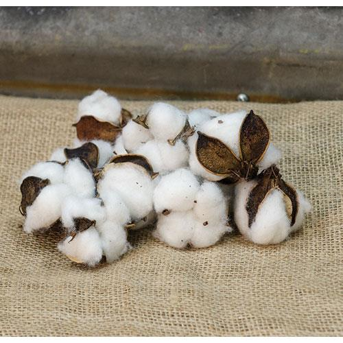 Cotton Bowl Fillers - Simple Pleasures ~ Bountiful Treasures