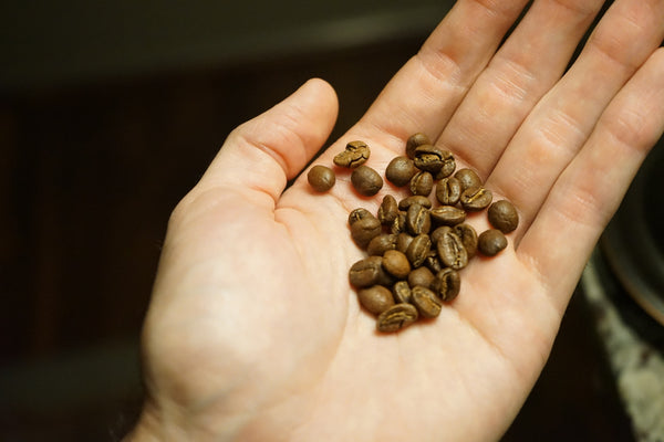 Common Misconceptions in Coffee [Volume I]-3