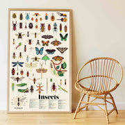 Poppik Discovery Sticker Poster Insects framed