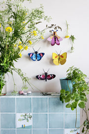 studio roof 3 D cardboard butterlies and pink bee on the wall