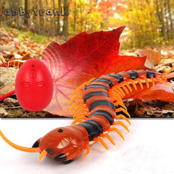 Remote Control Centipede. Tricky, Funny, Creative Animal Prank Toy.  Some pets especially cats are a lot of fun to watch around this toy.