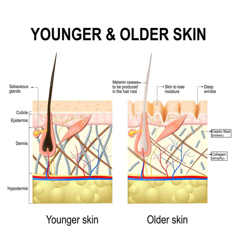 Aging skin, what is collagen, skin care, how does skin age