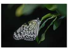 Paper Kite Butterfly (Aluminum Print - No Frame)