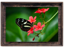 Atthis Longwing Butterfly (Modern Rustic Floating Art Print with Hidden Storage for Jewelry)