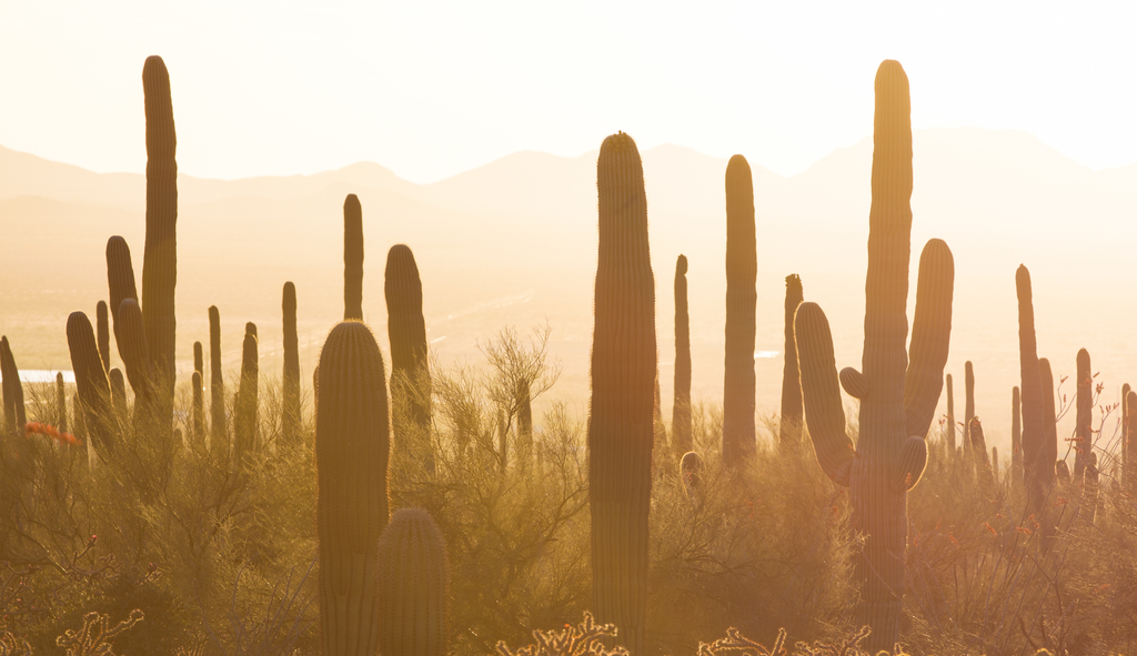 How Cacti Can Help Your Skin Puristry