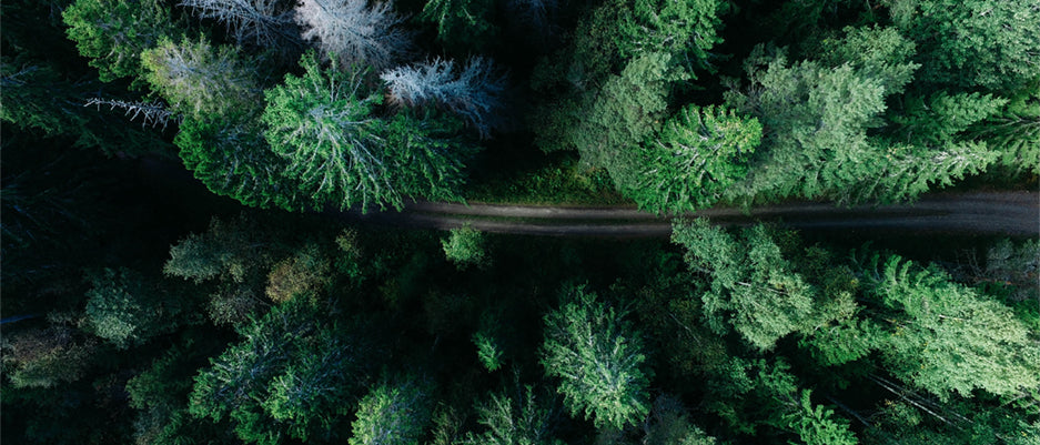 Road weaving through forest
