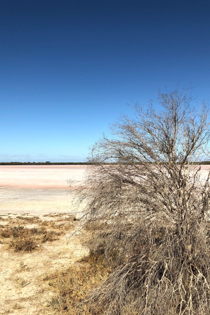 Pink-lakes-and-pastel-sneakers-The-Science-behind-Australia's-pink-lakes-The-Fashion-Advocate-nature-photography-outback-australia-
