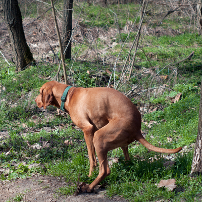 What Your Pup's Dung Is Telling You