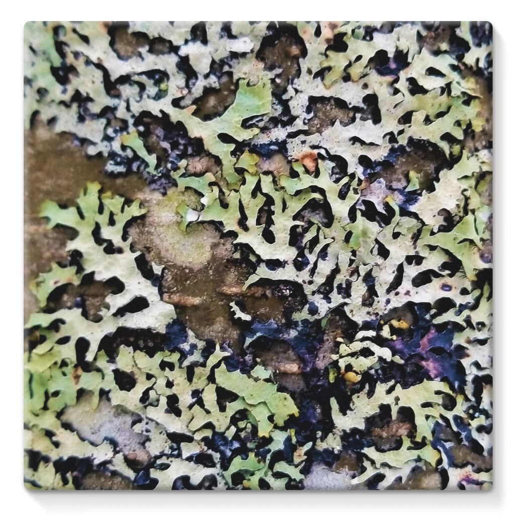 Lichen Up: Stretched Canvas
