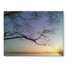 Sea Tree: Stretched Canvas