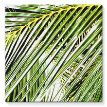 Filtered Palm: Stretched Canvas