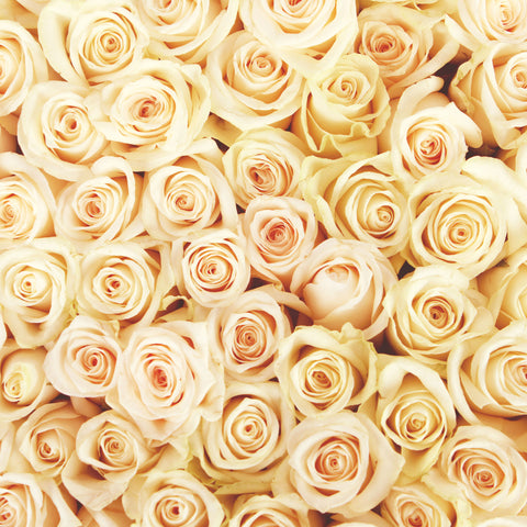 Rose Cream Self Adhesive Vinyl