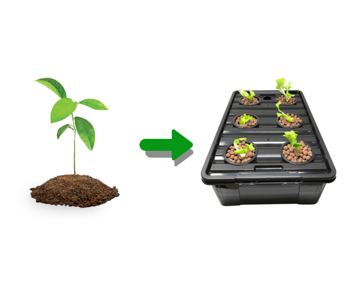 How to Transplant from Soil into DWC Hydroponic System