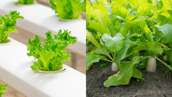 Why Hydroponics Is Better Than Soil Growing