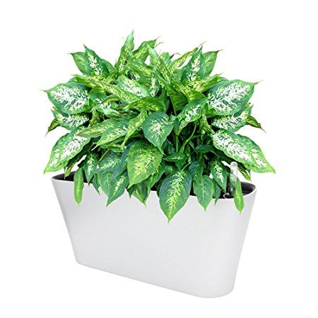Ergo Self Watering Planter Pot - Modern Indoor Outdoor Planter Box