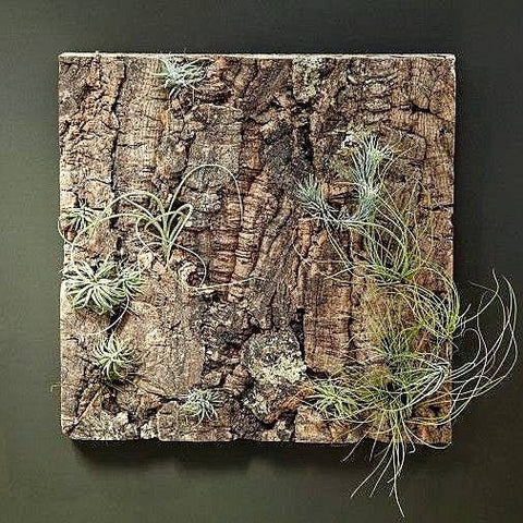 Natural Cork Panel for Air Plants Display
