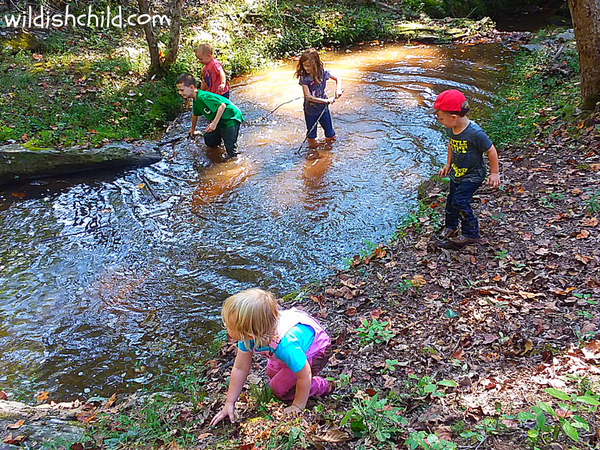 wildish child pumpkins and play time kids playing in creek