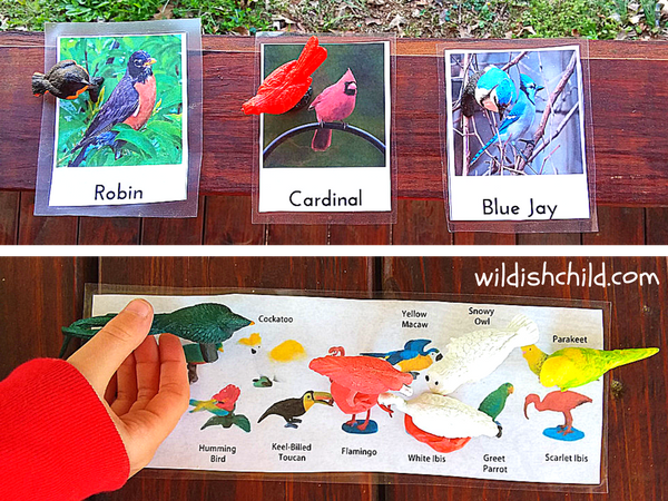 wildish child bird sensory bin printables