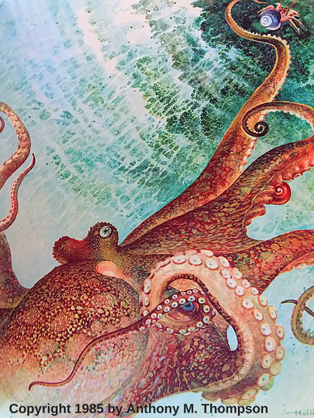 wildish child favorite book friday pagoo being chased by octopus