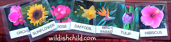 wildish child flower sensory bin flower cards