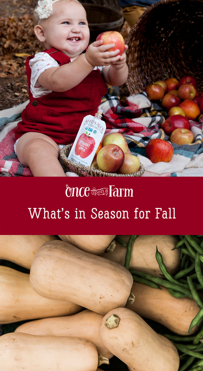 What's in Season for Fall