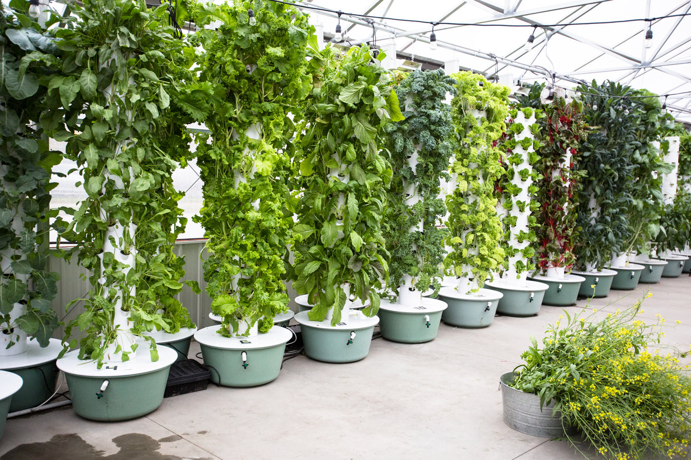 HYDROPONIC TOWERS, WHAT'S THE DEAL?