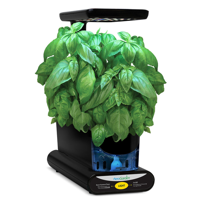 3-Pod Pesto Basil Seed Kit
